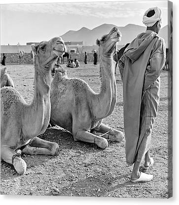 Camel Market, Morocco, 1972 - Travel Photography By David Perry Lawrence Canvas Print by David Perry Lawrence