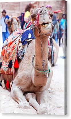 Camel Of Petra Canvas Print by Alexey Stiop
