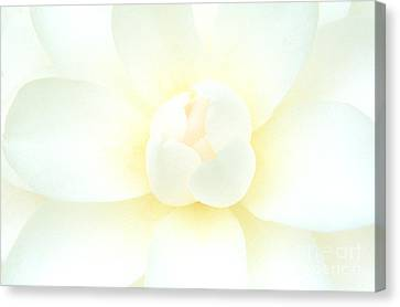 Canvas Print featuring the photograph Camelia Flower by Chris Scroggins