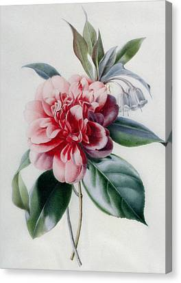 Camellia Canvas Print by Marie-Anne