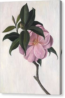 Camellia Canvas Print by Ruth Addinall