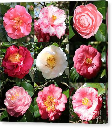 Camellia Time Collage Canvas Print by Carol Groenen