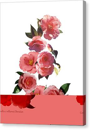 Camellia Canvas Print - Camellia X Williamsii 'donation' by Science Photo Library
