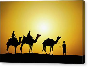 Camel Canvas Print - Camels And Camel Driver Silhouetted by Adam Jones