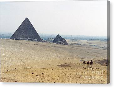 Canvas Print featuring the photograph Camels At Giza by Cassandra Buckley