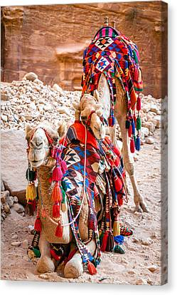 Camels Bff Canvas Print