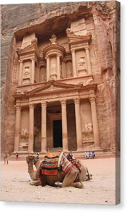 Camels In Petra Canvas Print by Rebecca Baker