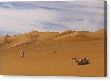 Camels Canvas Print by Ivan Slosar