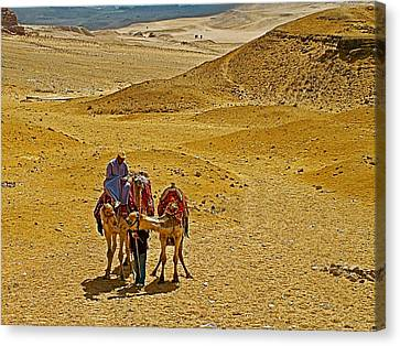 Camels Nuzzling On The Giza Plateau-egypt  Canvas Print by Ruth Hager