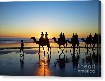 Camels On The Beach Broome Western Australia Canvas Print by Colin and Linda McKie