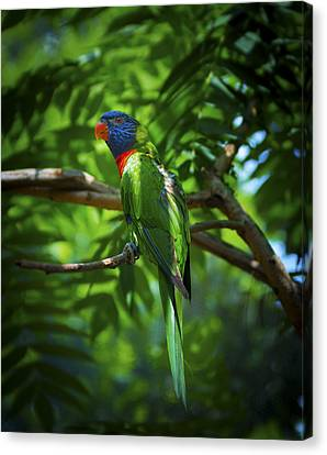 Camo Macaw Canvas Print by Wayne Stacy