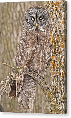 Camouflage-an Owl's Best Friend Canvas Print by Heather King