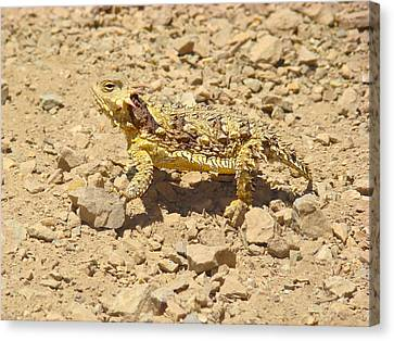 Canvas Print featuring the photograph Camouflage by Paul Foutz