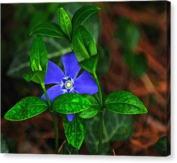 Camouflage Canvas Print by Frozen in Time Fine Art Photography