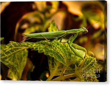 Camouflage Special Canvas Print by Robert Bales