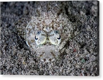Camouflaged Flathead Fish Canvas Print by Ethan Daniels