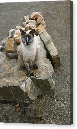 Blending Canvas Print - Camouflaged by Nina Fosdick