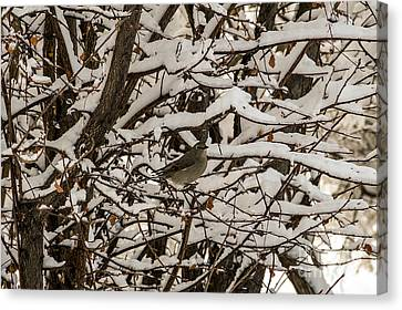 Canvas Print featuring the photograph Camouflaged Thrush by Sue Smith