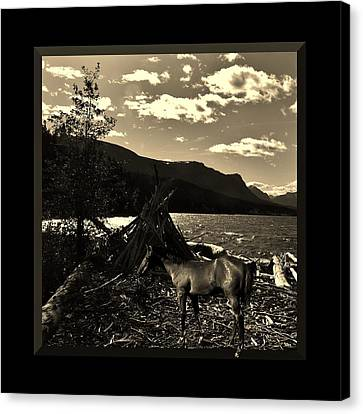 Camp Site Canvas Print by Barbara St Jean