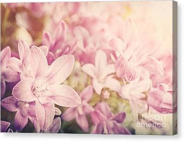 Campanula Floral Background Canvas Print by Mythja  Photography