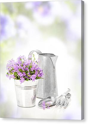 Campanula Flowers Canvas Print by Amanda Elwell