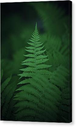 Canaan Fern Canvas Print