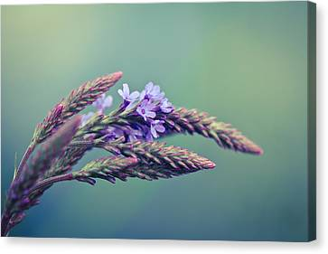 Canaan Grass Canvas Print