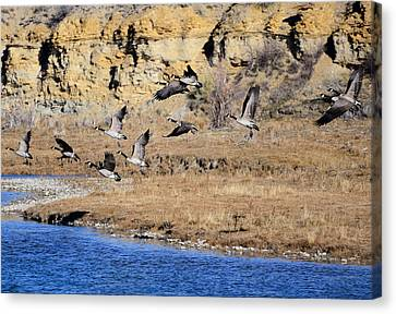 Canada Geese Along The Green River Canvas Print by Eric Nielsen