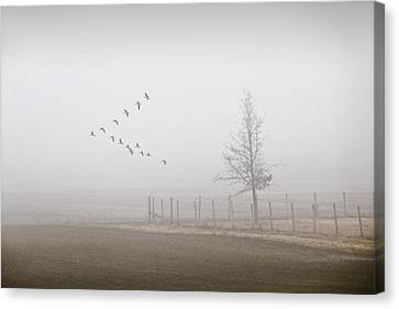 Canada Geese Flying On A Foggy Morning Canvas Print by Randall Nyhof