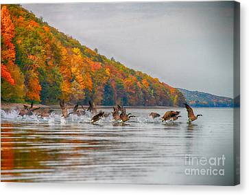 Canada Geese In Fall Canvas Print by Steve Clough