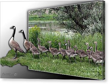 Canada Geese Canvas Print by J McCombie