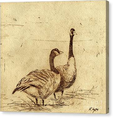 Canada Geese Canvas Print by Neil Rizos
