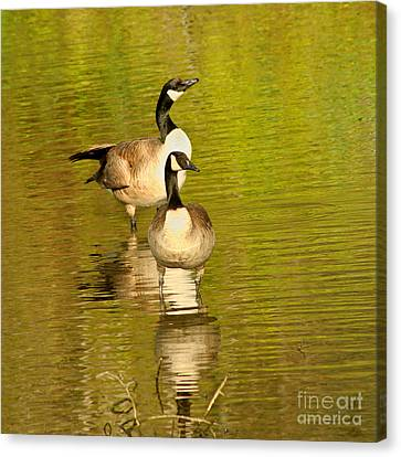 Canvas Print featuring the photograph Canada Geese Pair by Bob and Jan Shriner