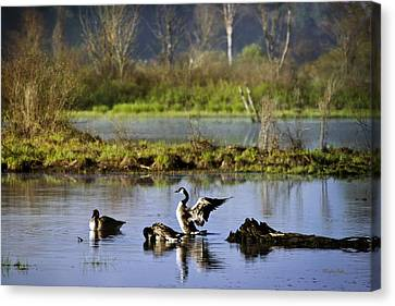 Canada Goose Dancing On Lake Canvas Print by Christina Rollo