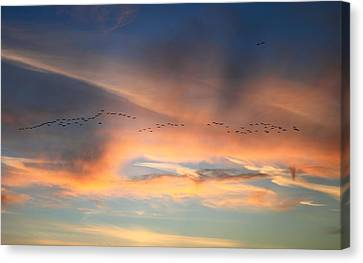 Canada Goose Flock Sunset Canvas Print by John Burk