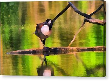 Canada Goose Spring Reflection Canvas Print by Dan Sproul