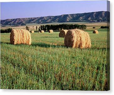 Canada, Manitoba, Rolled Hay Bales Canvas Print by Jaynes Gallery
