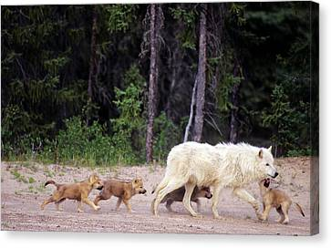 Canada, Northwest Territories, Great Canvas Print by Jaynes Gallery