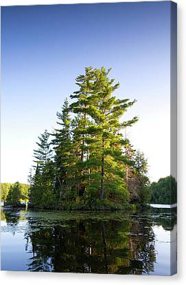 White Pines Canvas Print - Canada, Quebec Island On Lake Long Pond by Jaynes Gallery