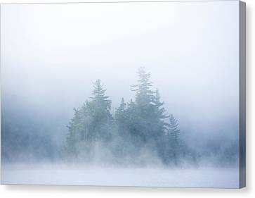 White Pines Canvas Print - Canada, Quebec, Lake Long Pond by Jaynes Gallery