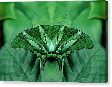 Canada, Victoria, Victoria Butterfly Canvas Print by Jaynes Gallery