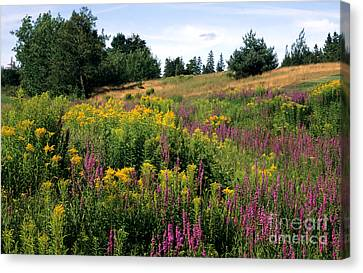 Canvas Print featuring the photograph Canada Wildflower Meadow by Chris Scroggins