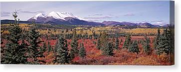 Canada, Yukon Territory, View Of Pines Canvas Print