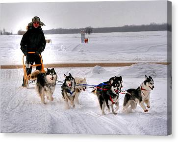 Canadian Dogsled Team Canvas Print by Larry Trupp