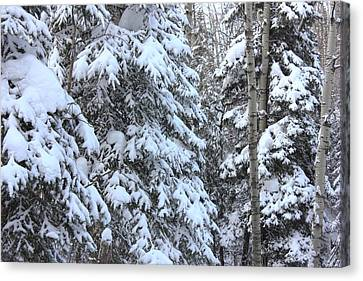 Canadian Forest - Winter Snowfall Canvas Print