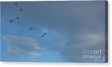 Canadian Geese 1 Of 3 Canvas Print by Janet Otto