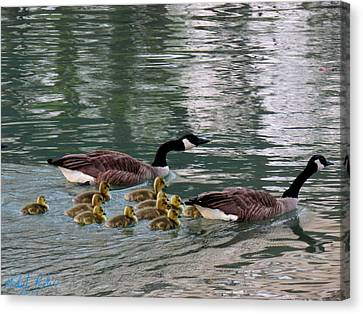 Canadian Geese Family Canvas Print by Michael Rucker