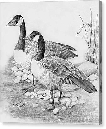 Canadian Geese  Canvas Print by Suzanne Schaefer