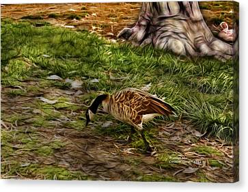 Canadian Goose 9382 F S Canvas Print by James Ahn