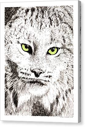 Canadian Lynx Canvas Print by Paul Kmiotek